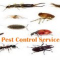 Useful Tips To Resist The Unwanted Home Invaders Like Insects,Bedbug and Termites