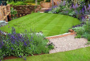 backyard green lawn