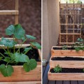Tips, How To Maintain Indoor Herb Garden